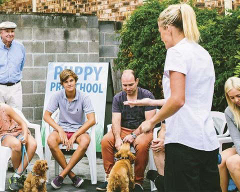 puppy-school
