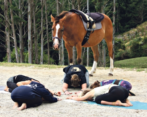 SpiritRides are now offering equine yoga classes. Image thanks to Murray Clear.